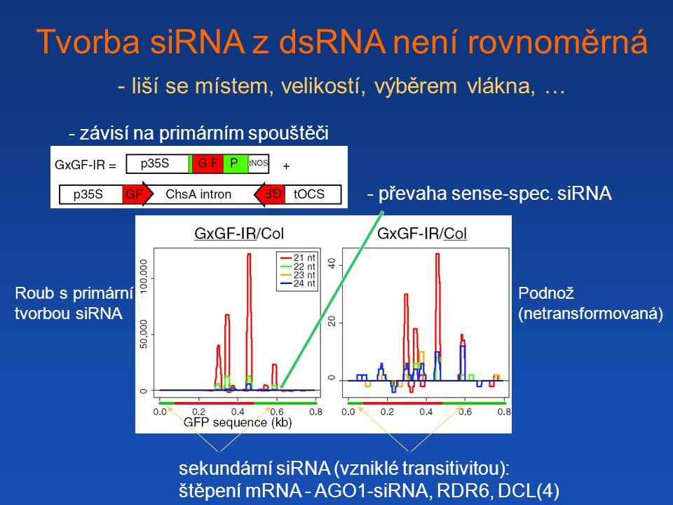 Tvorba siRNA z dsRNA není rovnoměrná