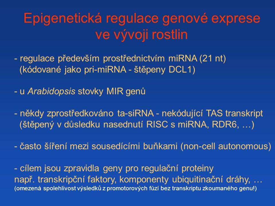 Epigenetická regulace genové exprese