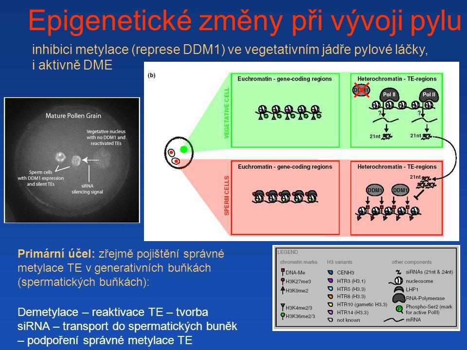 Epigenetické změny při vývoji pylu