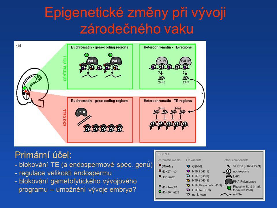Epigenetické změny při vývoji