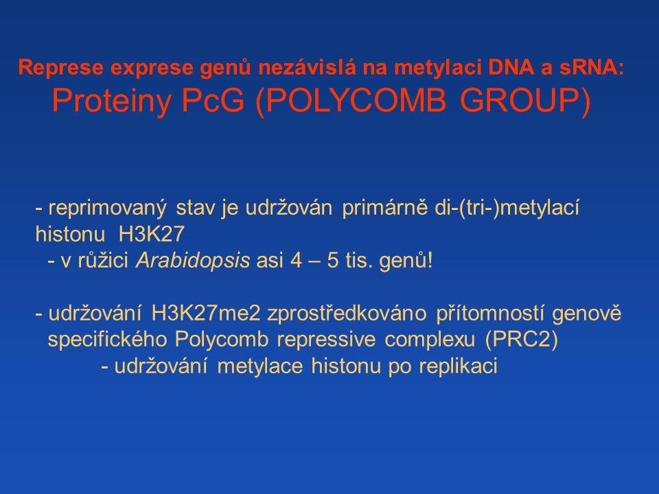 Represe exprese genů nezávislá na metylaci DNA a sRNA:
