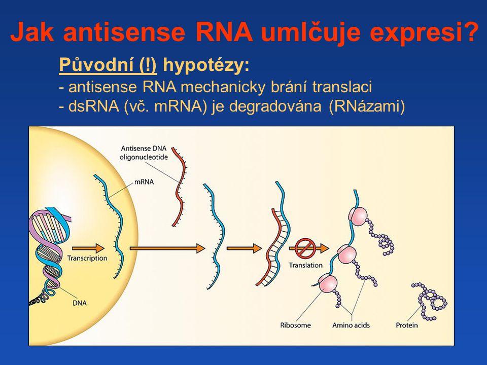 Jak antisense RNA umlčuje expresi
