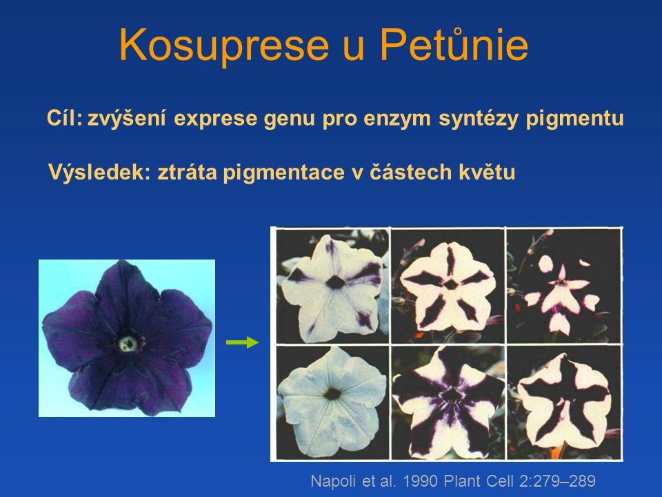 Cíl: zvýšení exprese genu pro enzym syntézy pigmentu