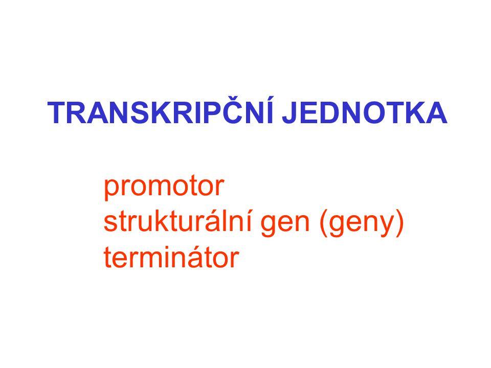 TRANSKRIPČNÍ JEDNOTKA promotor strukturální gen (geny) terminátor