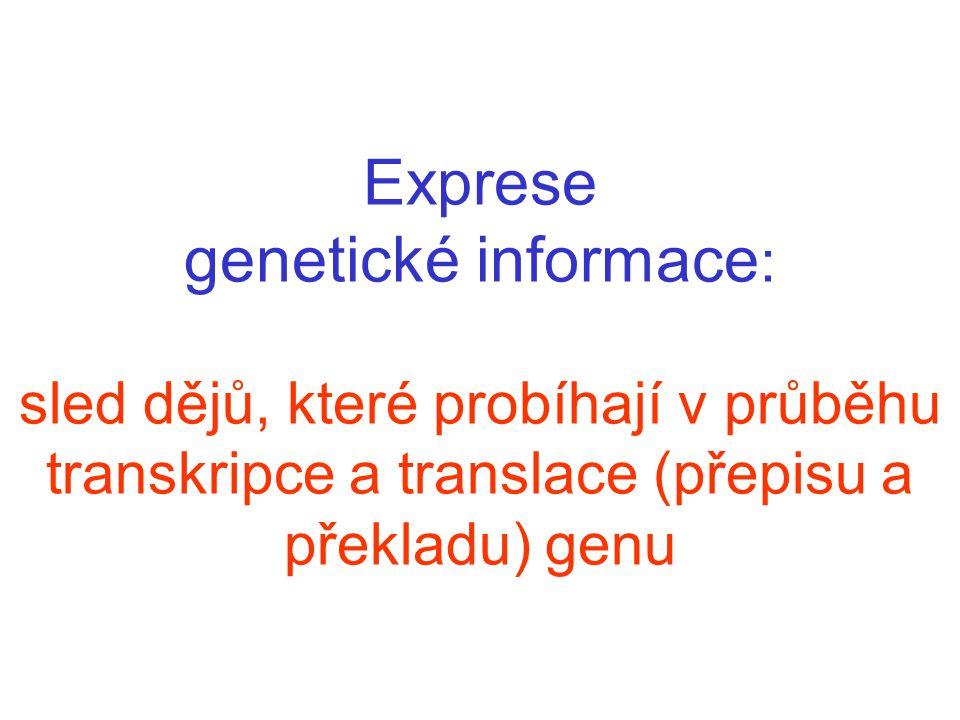 Exprese genetické informace: sled dějů, které probíhají v průběhu transkripce a translace (přepisu a překladu) genu