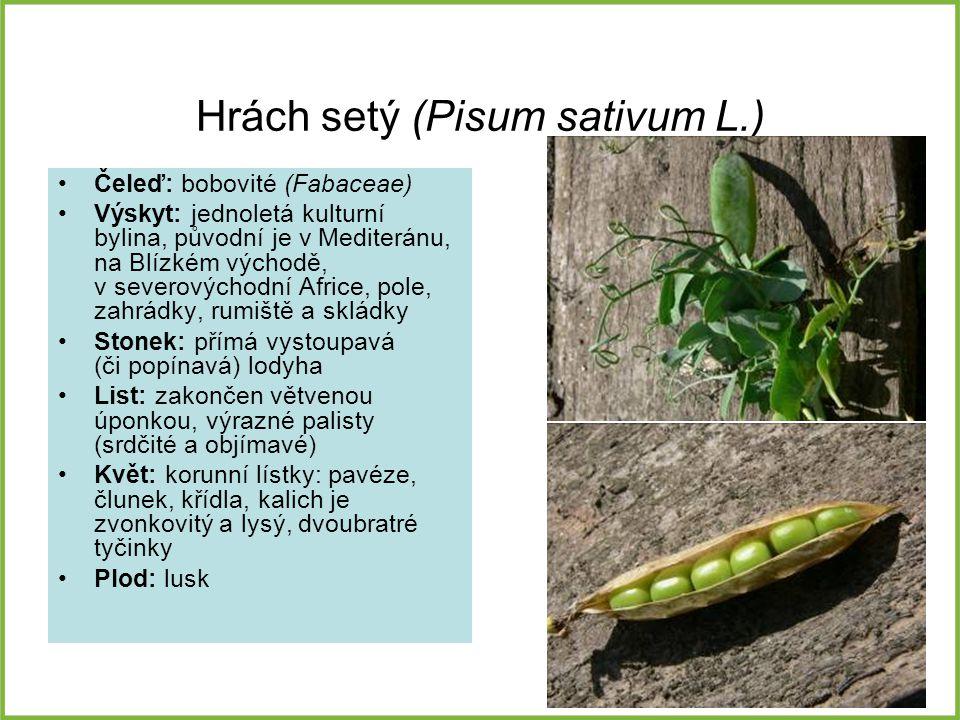 Hrách setý (Pisum sativum L.)