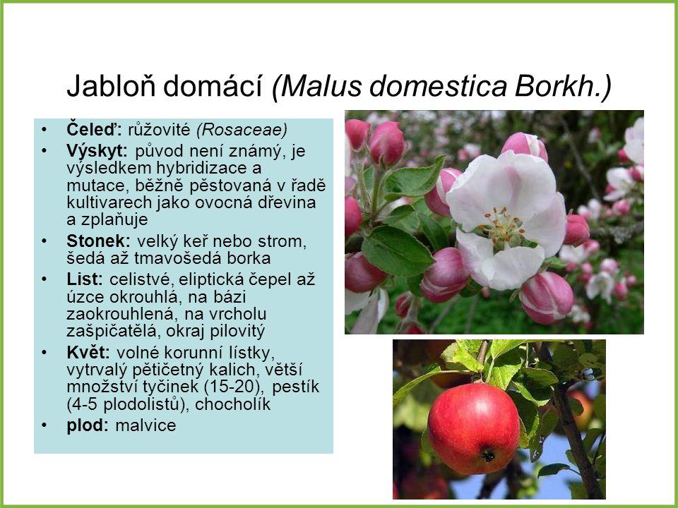 Jabloň domácí (Malus domestica Borkh.)