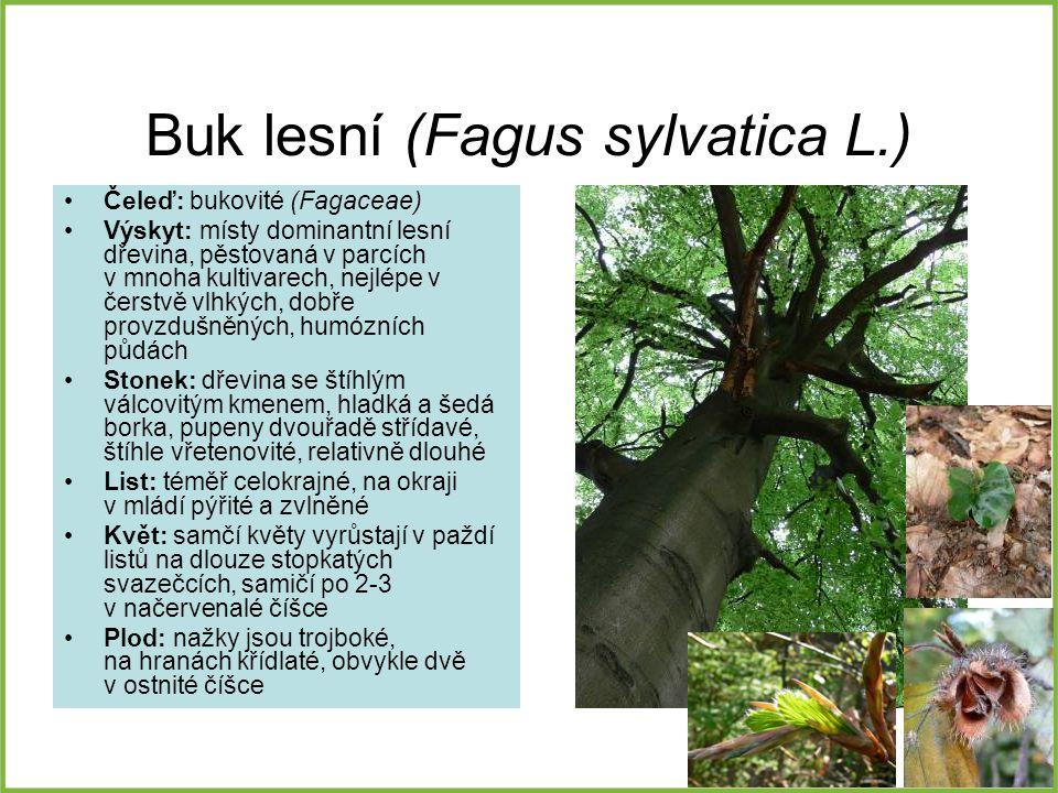 Buk lesní (Fagus sylvatica L.)