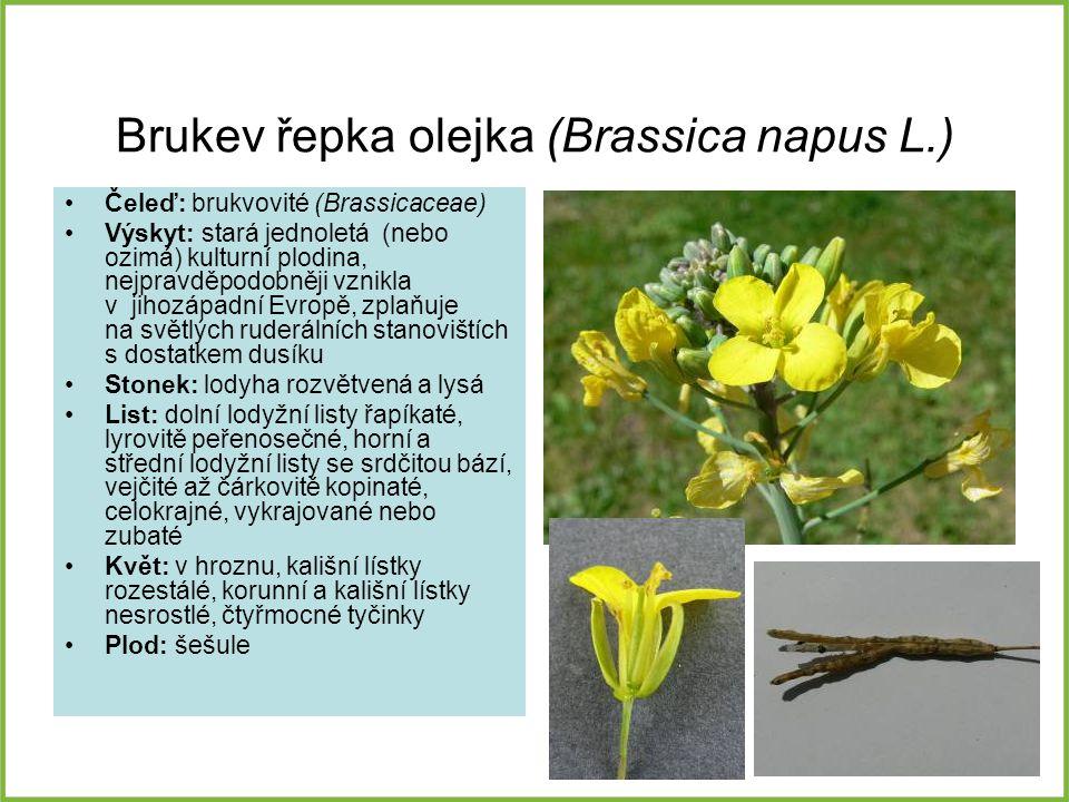 Brukev řepka olejka (Brassica napus L.)