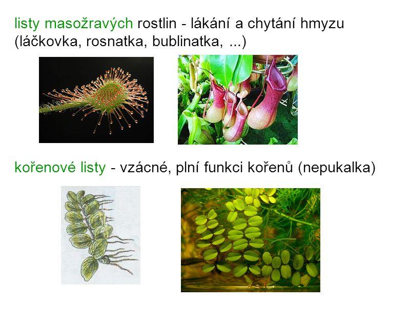 listy masožravých rostlin - lákání a chytání hmyzu (láčkovka, rosnatka, bublinatka, ...)