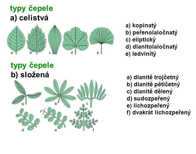 typy čepele a) celistvá typy čepele b) složená a) kopinatý