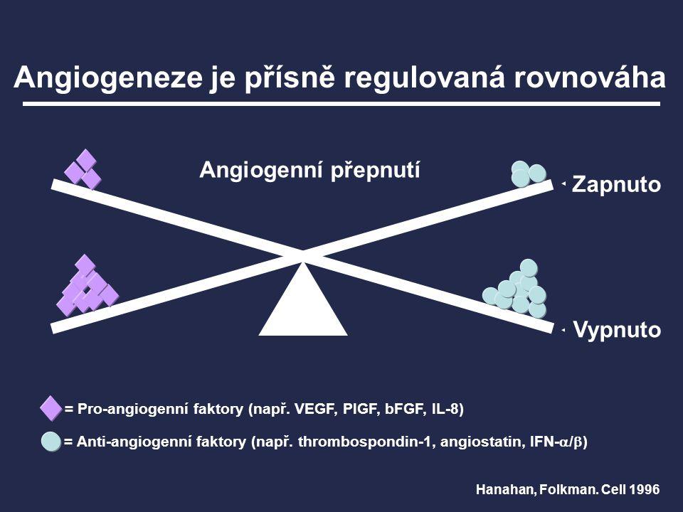 Angiogeneze je přísně regulovaná rovnováha