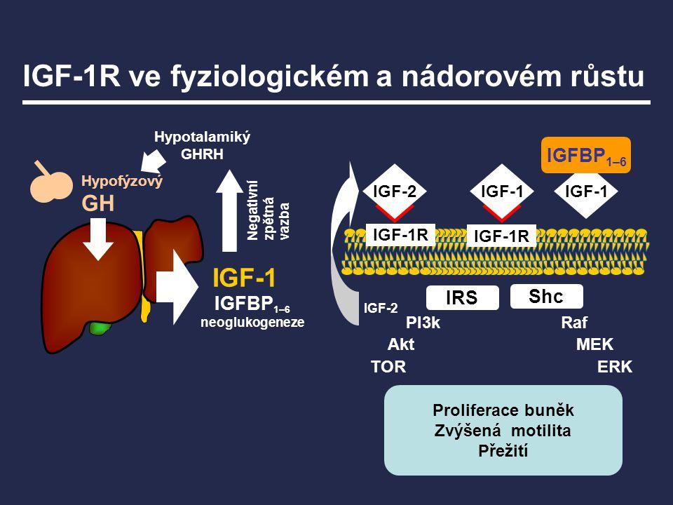 IGF-1R ve fyziologickém a nádorovém růstu