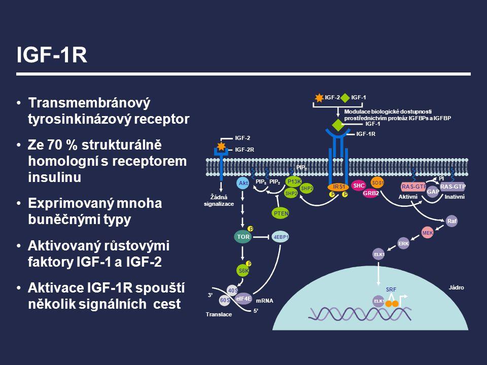 IGF-1R Transmembránový tyrosinkinázový receptor