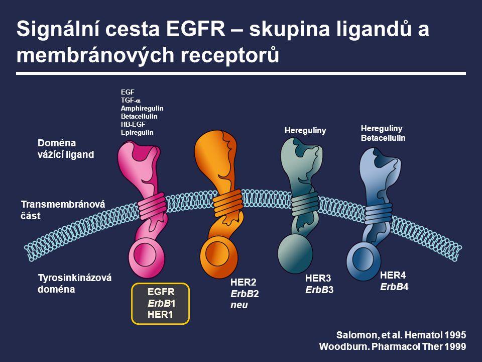 Signální cesta EGFR – skupina ligandů a membránových receptorů