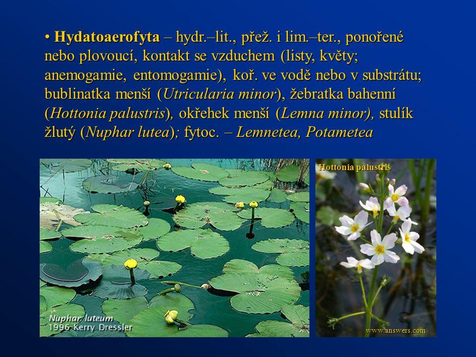 Hydatoaerofyta – hydr. –lit. , přež. i lim. –ter