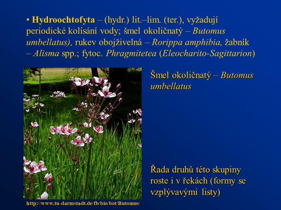 Šmel okoličnatý – Butomus umbellatus