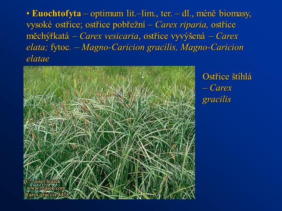 Euochtofyta – optimum lit. –lim. , ter. – dl