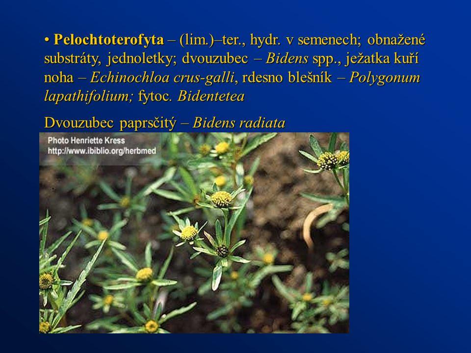 Pelochtoterofyta – (lim. )–ter. , hydr