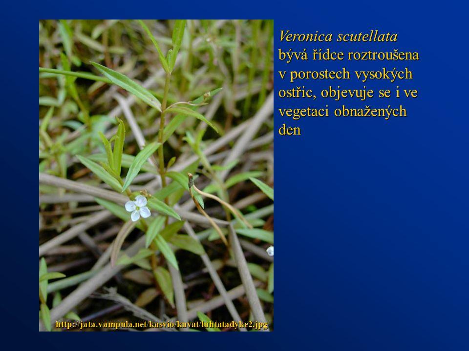 Veronica scutellata bývá řídce roztroušena v porostech vysokých ostřic, objevuje se i ve vegetaci obnažených den