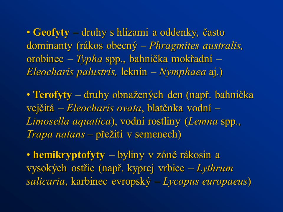 Geofyty – druhy s hlízami a oddenky, často dominanty (rákos obecný – Phragmites australis, orobinec – Typha spp., bahnička mokřadní – Eleocharis palustris, leknín – Nymphaea aj.)