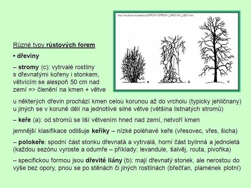 Různé typy růstových forem • dřeviny