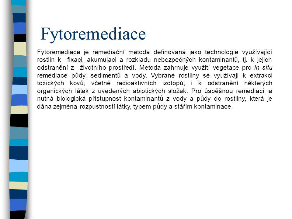 Fytoremediace