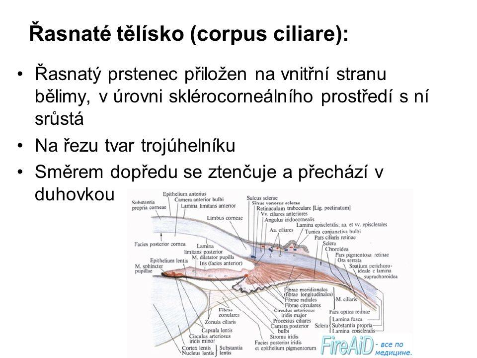 Řasnaté tělísko (corpus ciliare):