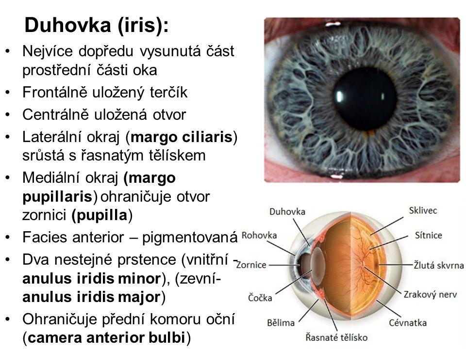 Duhovka (iris): Nejvíce dopředu vysunutá část prostřední části oka