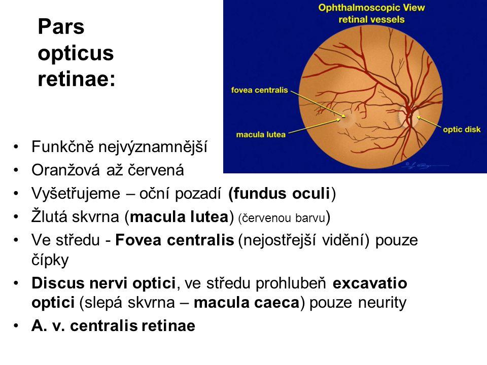 Pars opticus retinae: Funkčně nejvýznamnější Oranžová až červená