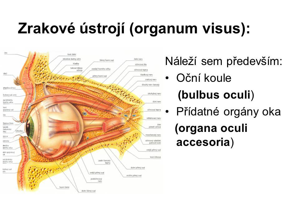 Zrakové ústrojí (organum visus):
