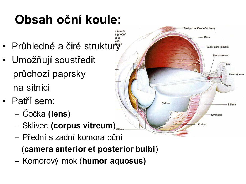 Obsah oční koule: Průhledné a čiré struktury Umožňují soustředit