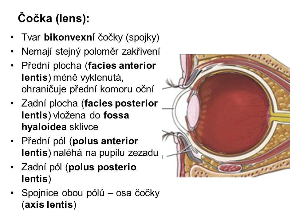 Čočka (lens): Tvar bikonvexní čočky (spojky)