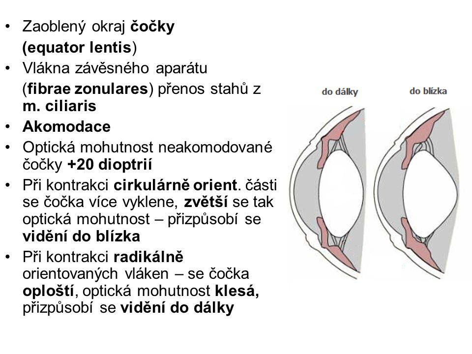 Zaoblený okraj čočky (equator lentis) Vlákna závěsného aparátu. (fibrae zonulares) přenos stahů z m. ciliaris.