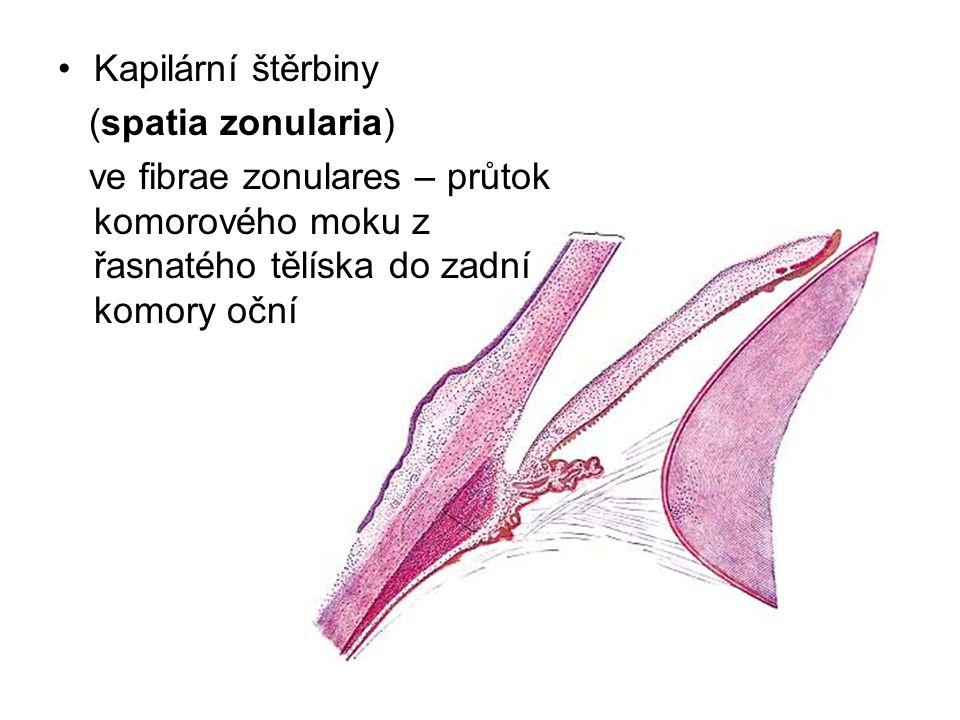 Kapilární štěrbiny (spatia zonularia) ve fibrae zonulares – průtok komorového moku z řasnatého tělíska do zadní komory oční.