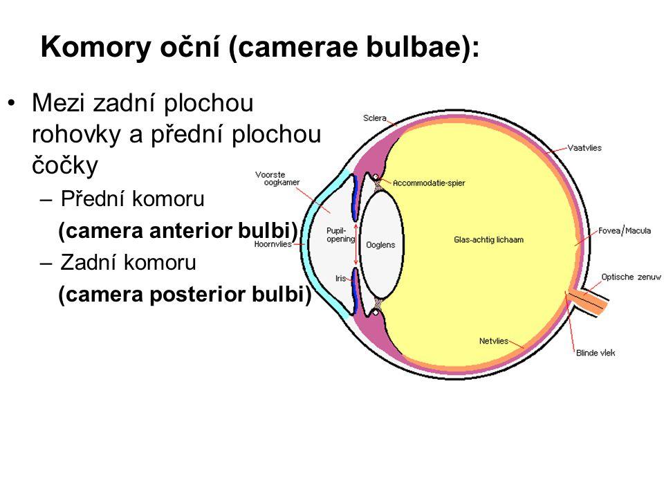 Komory oční (camerae bulbae):