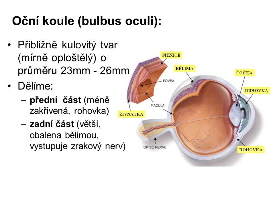 Oční koule (bulbus oculi):