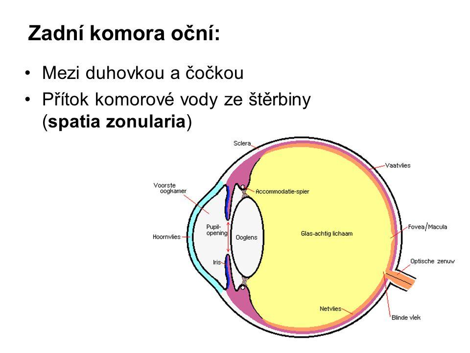 Zadní komora oční: Mezi duhovkou a čočkou