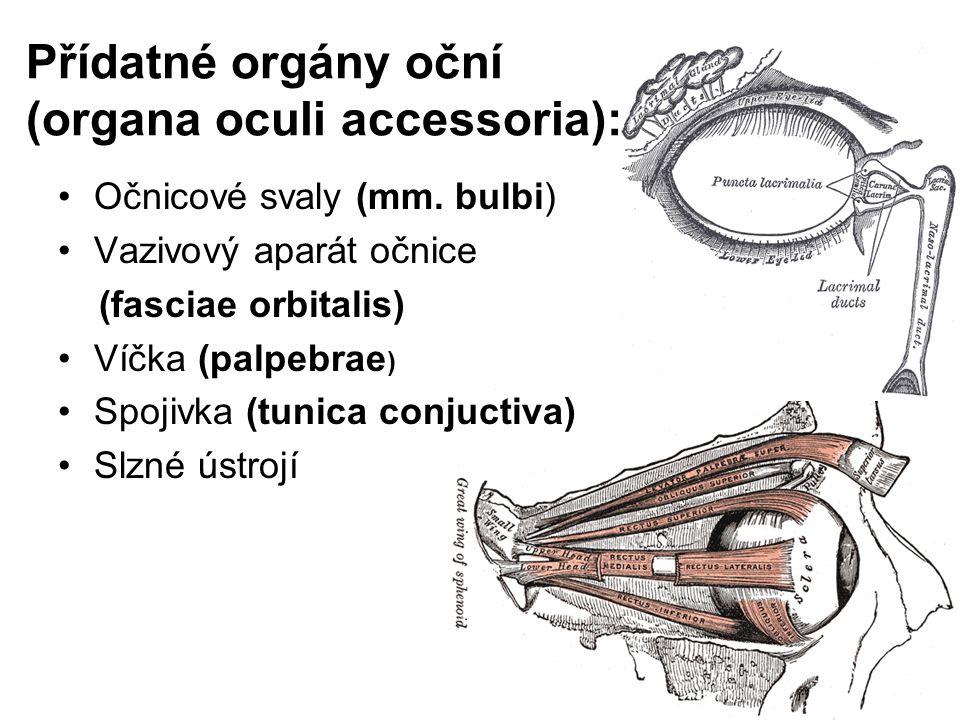Přídatné orgány oční (organa oculi accessoria):