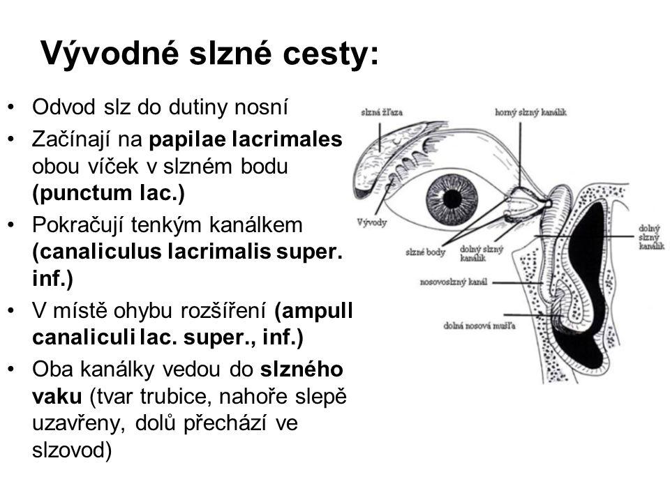 Vývodné slzné cesty: Odvod slz do dutiny nosní