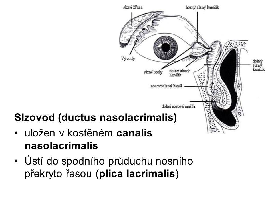 Slzovod (ductus nasolacrimalis)