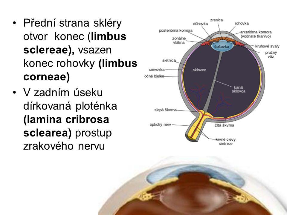 Přední strana skléry otvor konec (limbus sclereae), vsazen konec rohovky (limbus corneae)