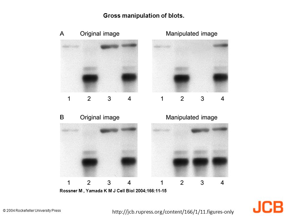 Gross manipulation of blots.