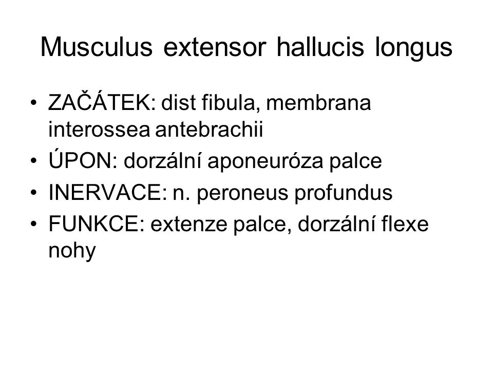 Musculus extensor hallucis longus