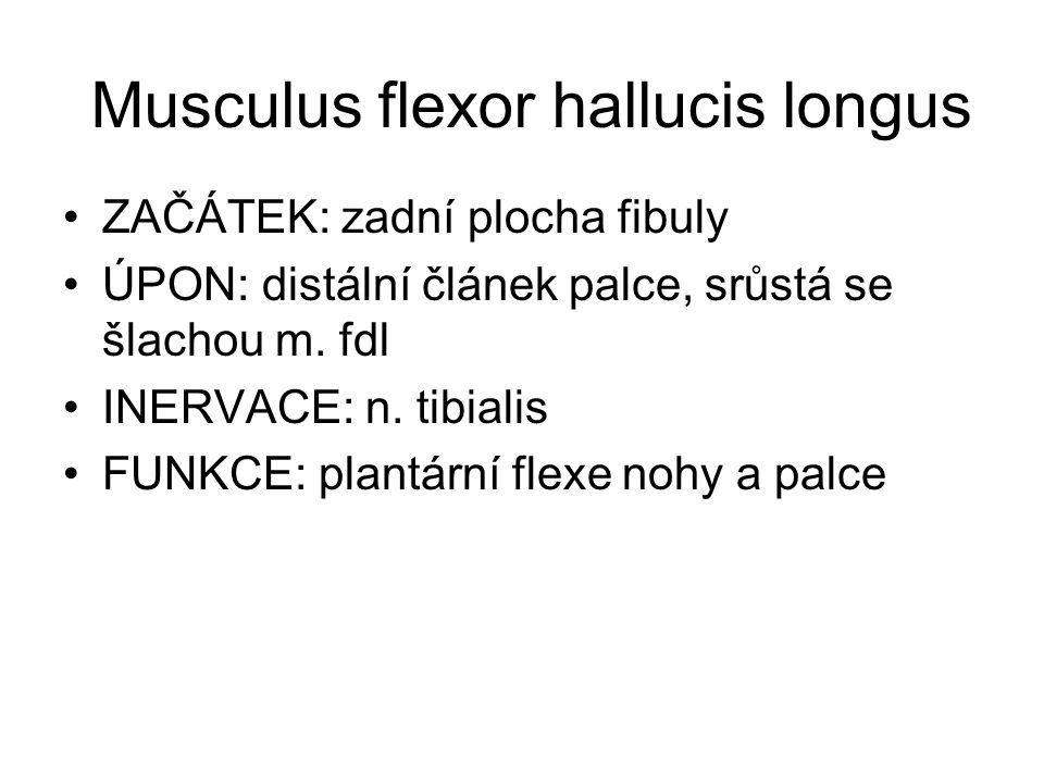 Musculus flexor hallucis longus
