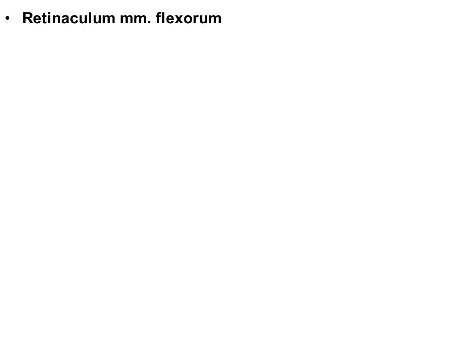 Retinaculum mm. flexorum