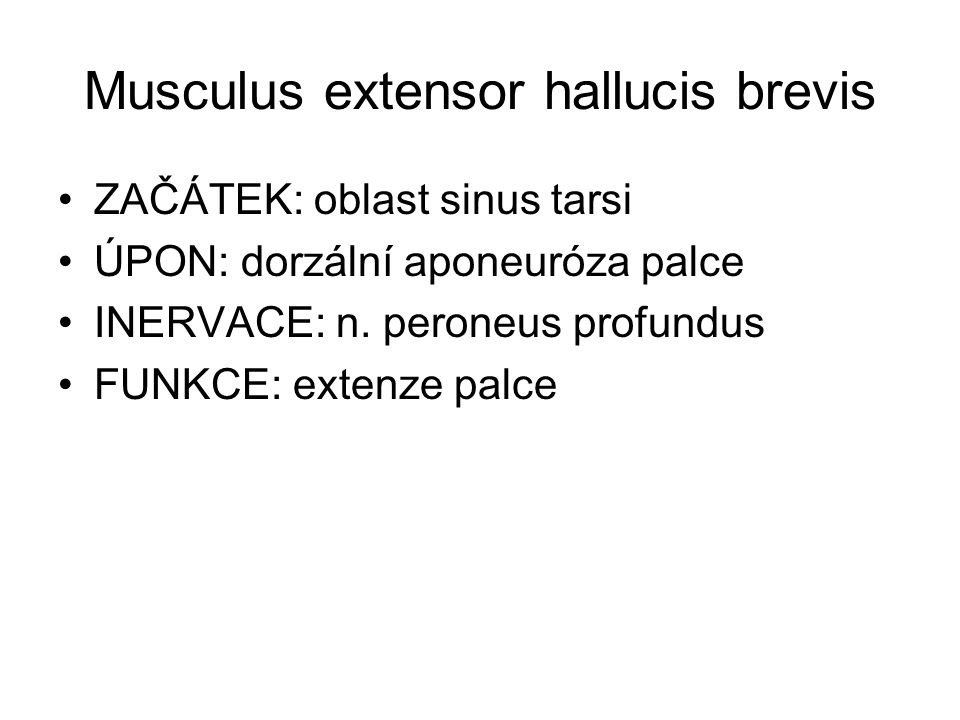 Musculus extensor hallucis brevis