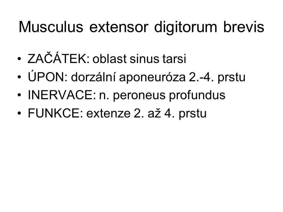 Musculus extensor digitorum brevis