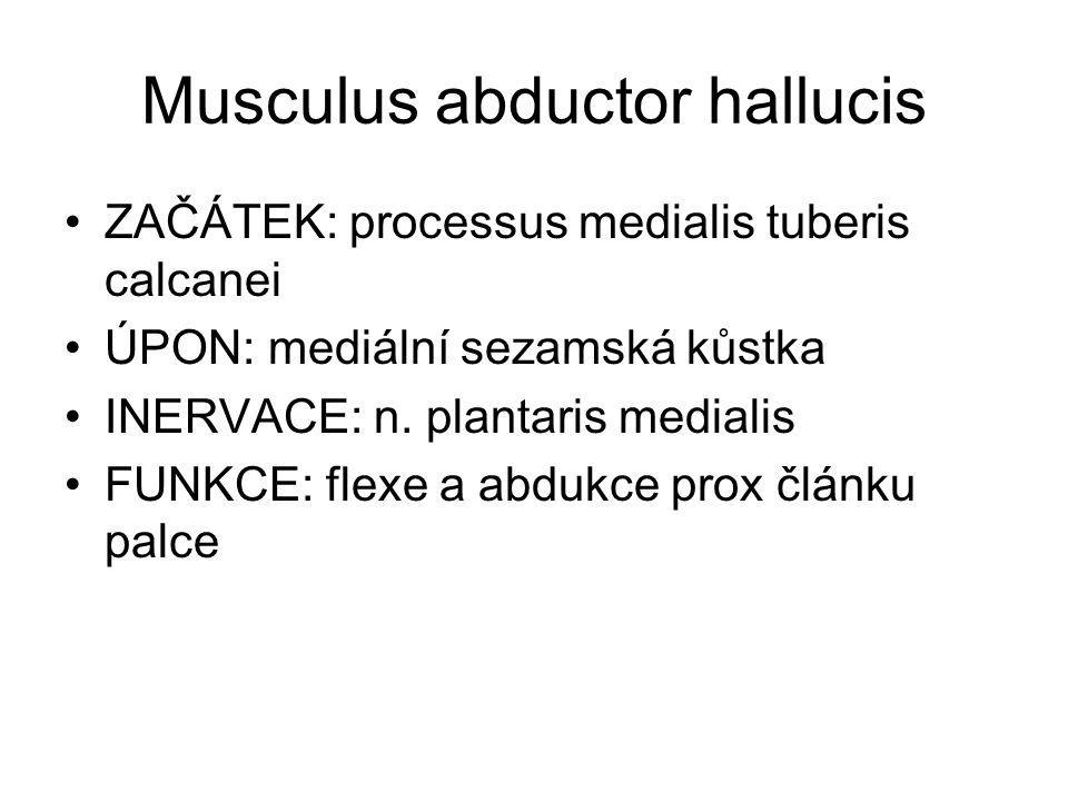 Musculus abductor hallucis