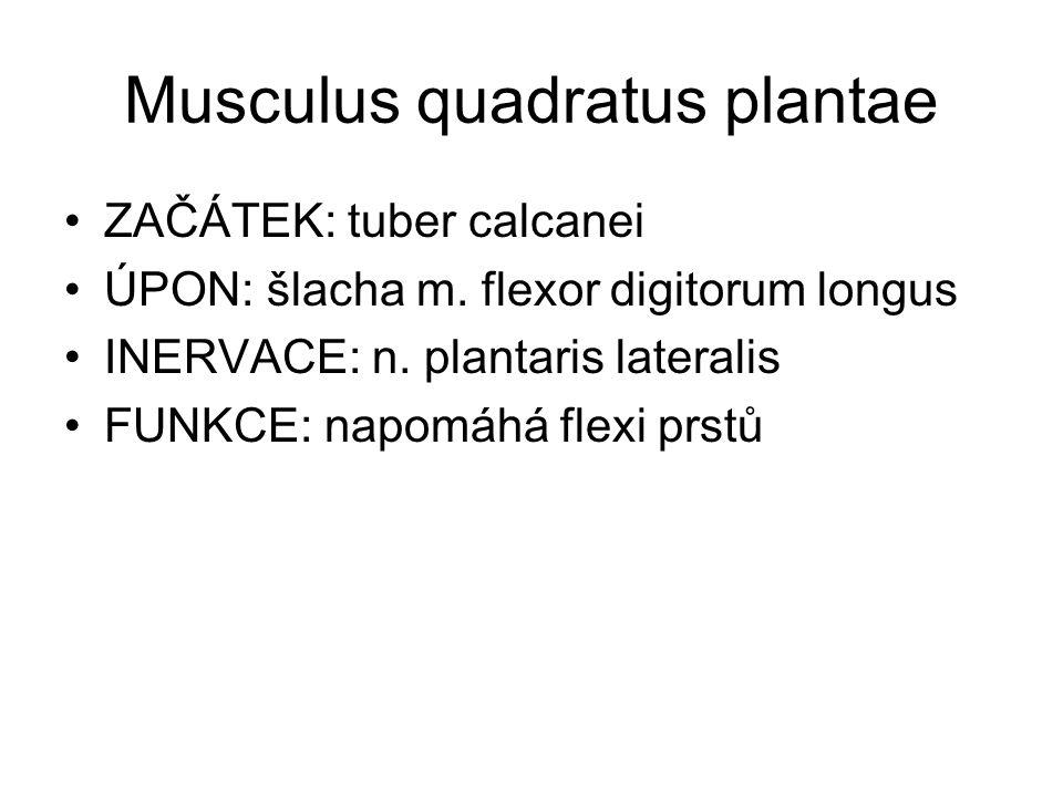 Musculus quadratus plantae